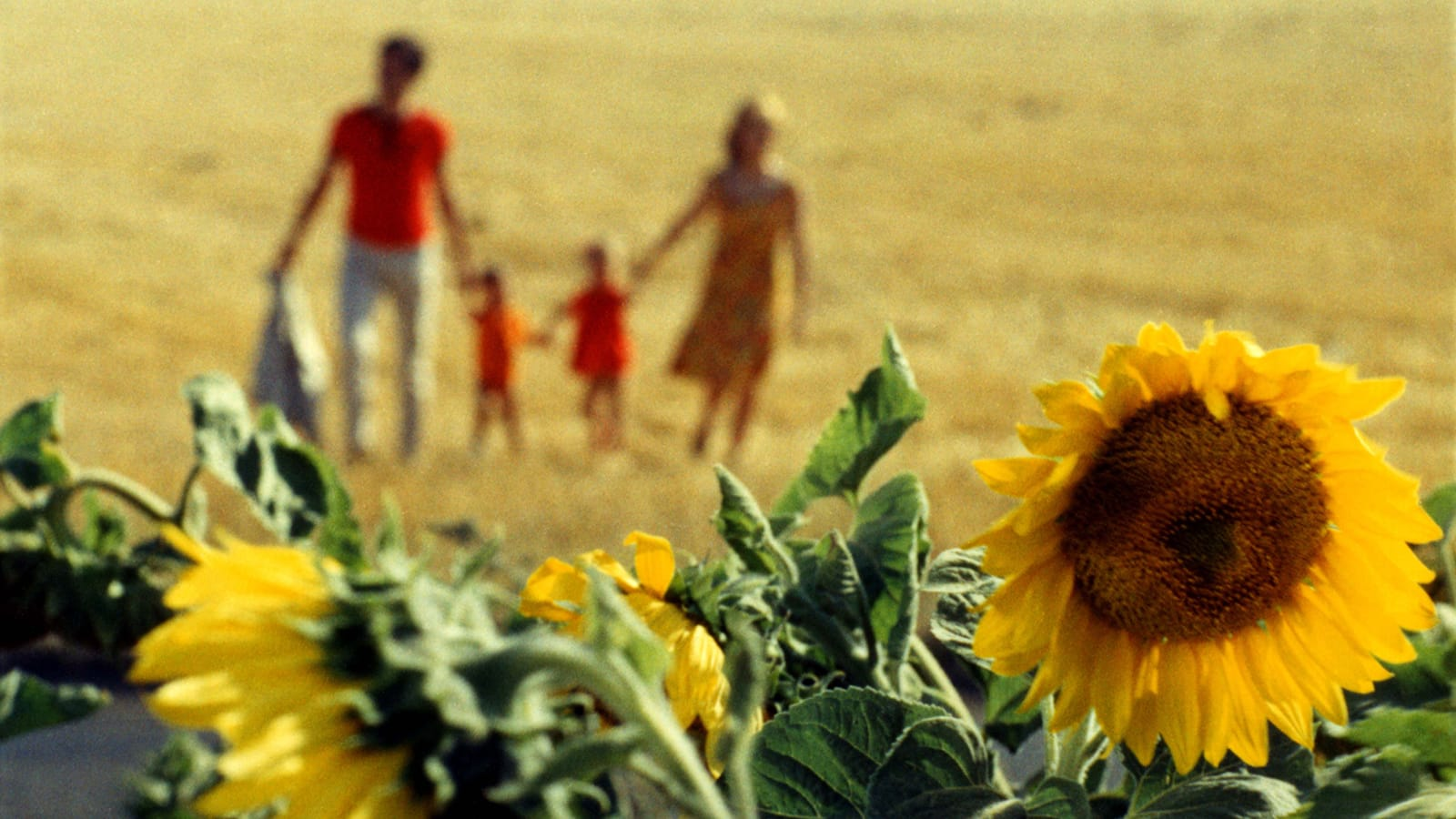 The family, a man, two small children, and a woman dressed in shades of red and orange, are blurred out in the background, standing in a field. In the foreground the focus is on vibrant yellow sunflowers.